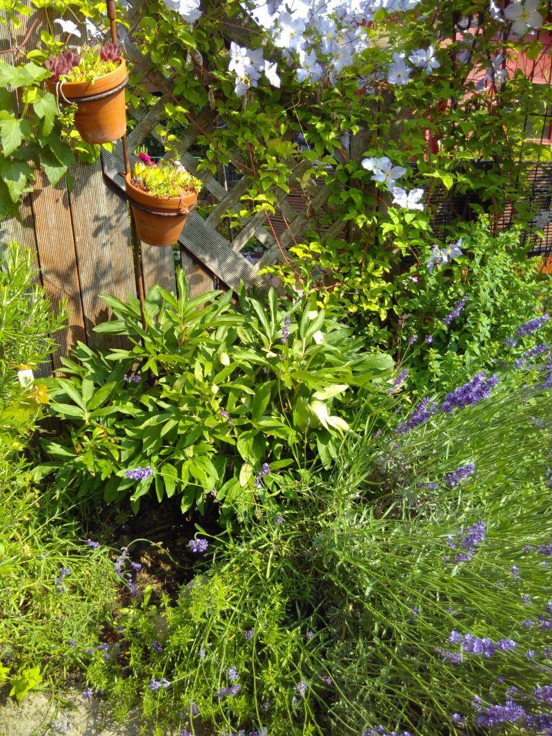 üppiges Grün neben meiner Terrasse