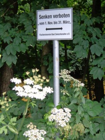 """Schild im Grünen. Text: """"Senken verboten vom 1. Nov. bis 31. März"""""""
